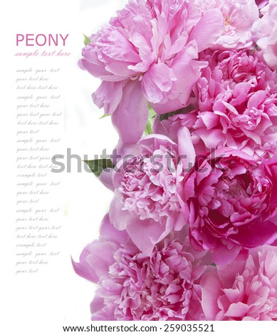 Peony background isolated on white with sample text - stock photo