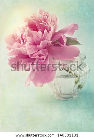 Peony flower in a vase - stock photo