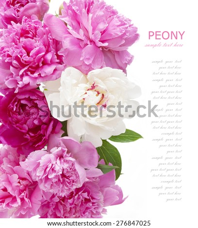 Peony flowers background isolated on white with sample text
