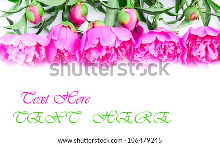 Peony flowers border on white background