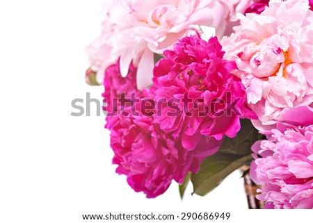 Peony flowers isolated on white - stock photo