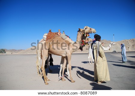 People and camels in Egypt