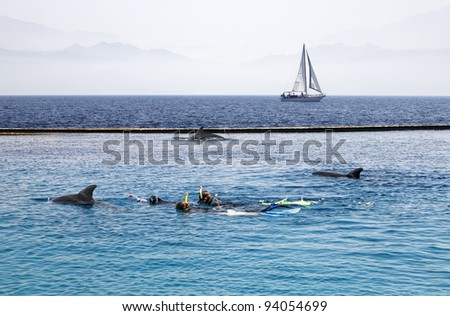 People and dolphins swimming in the Red sea on the background of the floating yacht (Eilat,Israel) - stock photo