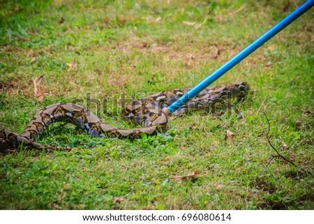 People Catching Snake Garden Snake Catcher Stock Photo (Royalty Free ...
