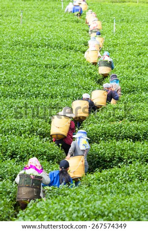 People are lining up for tea. - stock photo