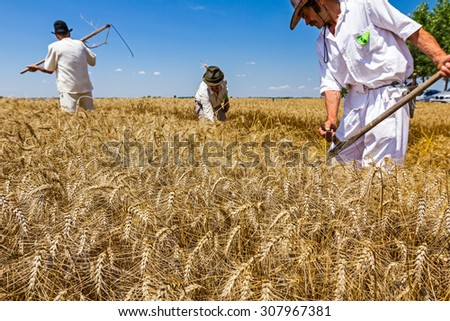 People are reaping wheat manually in a traditional rural way. - stock photo