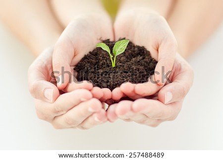 people, charity, family and ecology concept - close up of child and parent cupped hands holding soil with green sprout at home - stock photo