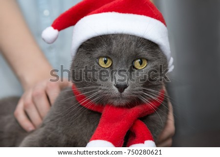 people dress up a cat in a Christmas costume & People Dress Cat Christmas Costume Stock Photo (Royalty Free ...