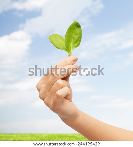 people, ecology, biology and environment concept - close up of woman hand with green sprout over blue sky and grass background - stock photo