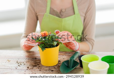 people, gardening, flower planting and profession concept - close up of woman or gardener hands planting roses to flower pot at home - stock photo