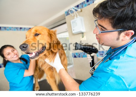 People grooming a beautiful dog at the vet - stock photo