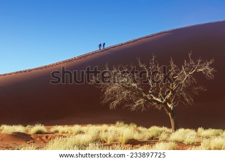 People on dunes of Namib desert, Namibia, South Africa  - stock photo