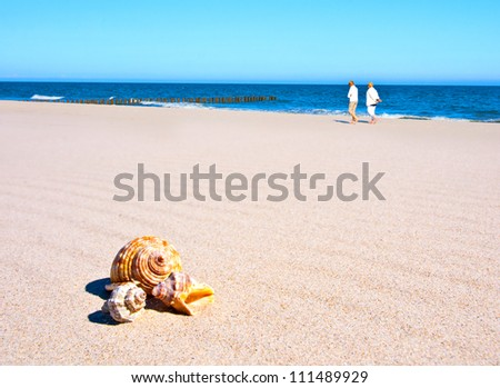 People walking on beach with shells - stock photo