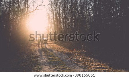 PEOPLE WALKING ON the road in the countryside with trees in surrounding. perspective in autumn - vintage film effect