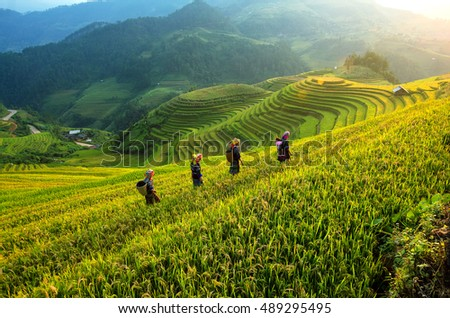 People wolking on the Rice fields terraced of Mu Cang Chai, YenBai, Vietnam