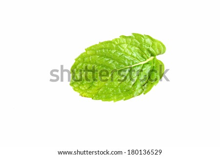 Pepper mint leaf isolated on white background.