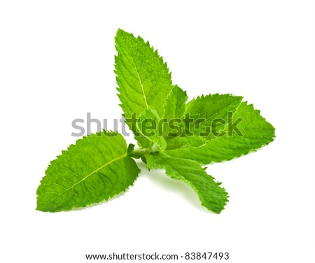 Pepper mint leaves, isolated on white background - stock photo