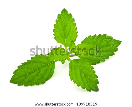 Pepper mint leaves, on white background - stock photo