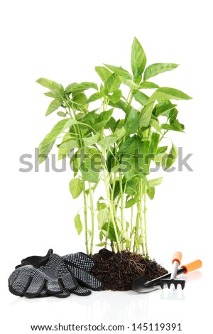 Pepper seedlings with garden tools isolated on white - stock photo