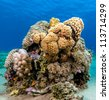 Peppercorn Moray Eels look out from a hard coral pinnacle - stock photo