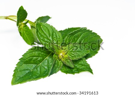 Peppermint leaf isolated.