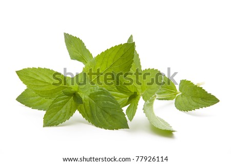 Peppermint leaves with tea bag