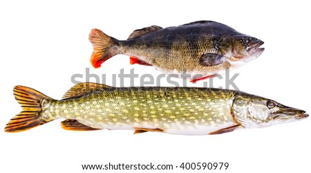 Perch and pike - two typical freshwater predators - stock photo