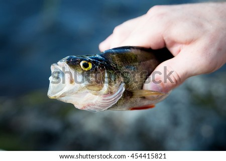 Perch in hand with big mouth.