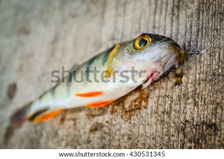 perch on a board - stock photo