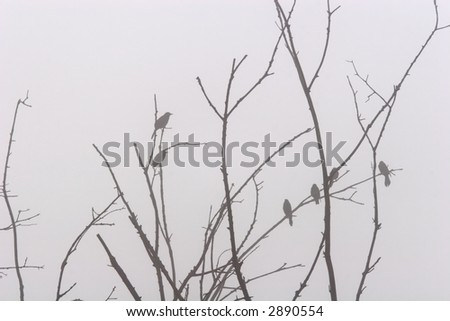 Perched in the Fog. Silhouette of several birds perched in a tree on a foggy morning. - stock photo