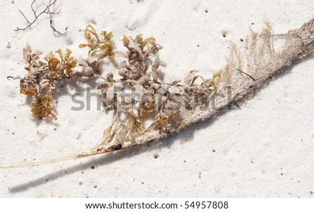 PERDIDO KEY - JUNE 10: An oil soiled bird feather lies on the beach on June 10, 2010 at Perdido Pass, AL. - stock photo