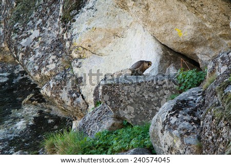 Peregrine falcon at nesting site on a rocky cliff - stock photo