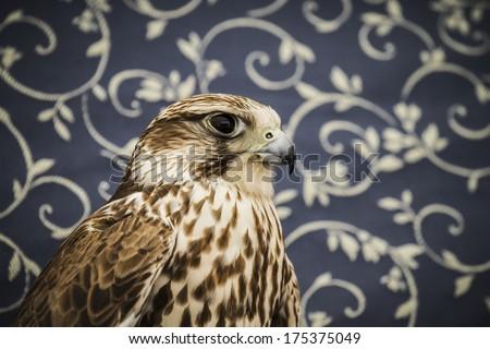 peregrine, falcon, medieval bird, wildlife concept - stock photo