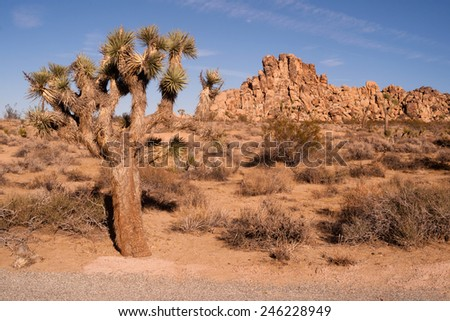 Perfect Day and Sky at Joshua Tree National Park - stock photo