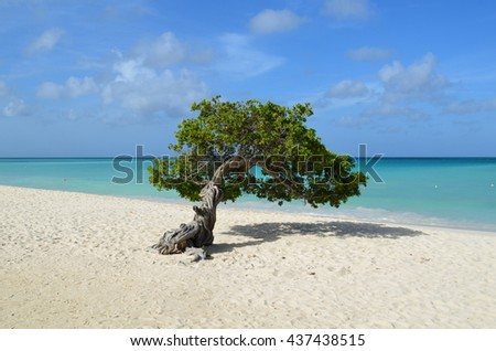 Perfect divi divi tree in Aruba with a white sand beach on the shore. - stock photo