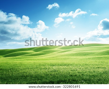 perfect field of spring grass