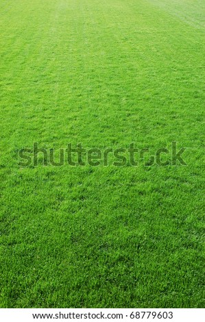 Perfect grass on the golf field - stock photo