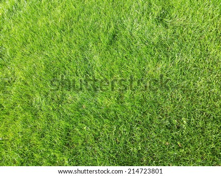 perfect green grass texture - stock photo