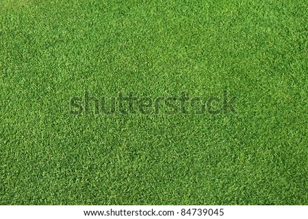 Perfect Green lawn - stock photo
