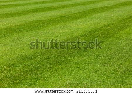 Perfect green lawn used for outdoors sports such as soccer.
