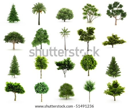 Perfect Group of Trees isolated on a white background. Twenty pieces with Large image Resolution - stock photo