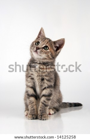 Perfect kitten looking upwards - stock photo