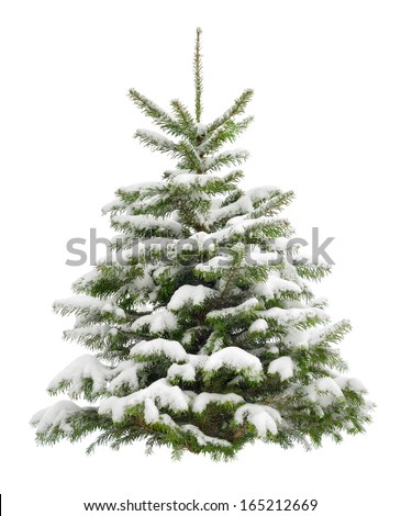 Perfect little Christmas tree in fresh snow,  isolated on pure white background - stock photo