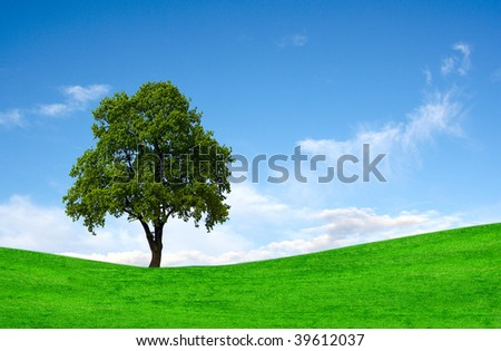 Perfect lone green tree against blue sky in a natural environment - stock photo