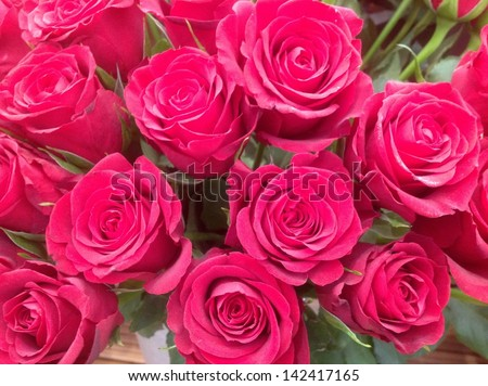 Perfect red roses - stock photo