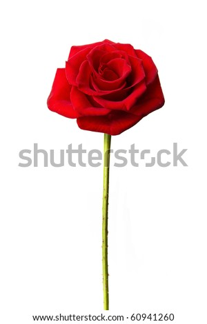 Perfect single red rose isolated on white - stock photo