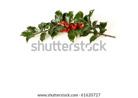 Perfect sprig of holly with bright red berries on white with room for your holiday text. - stock photo