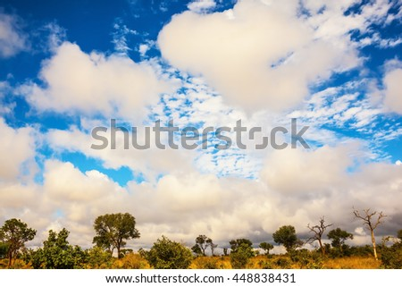 Perfect sunny day in Kruger National Park, South Africa - stock photo