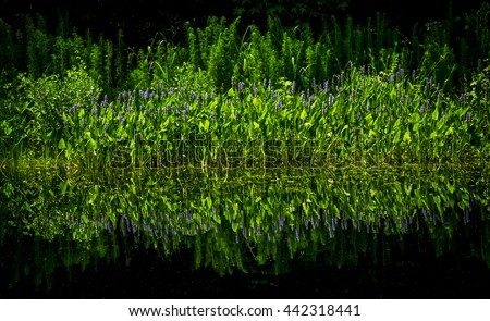 Perfect symmetry in reflections of plants and flowers along a dark ponds shore. - stock photo