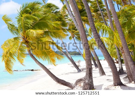 perfect tropical beach at bora bora island - stock photo